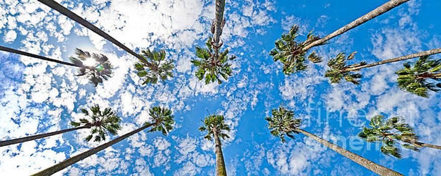 Skyward Palms by Az Jackson