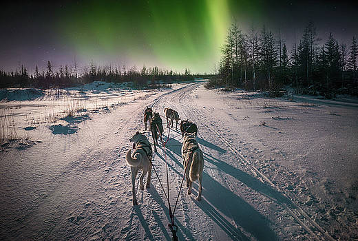 Sled Dogs and Northern Lights by Cheryl Ramalho