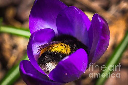 Ismo Raisanen - Sleep Well My Little Bumblebee