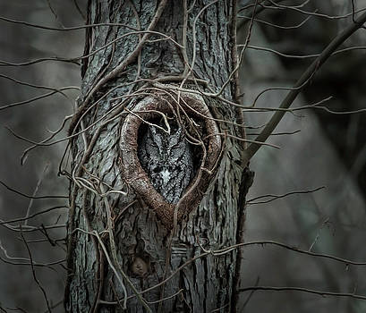 Sleeping Beauty by James Figielski by Paulinskill River Photography