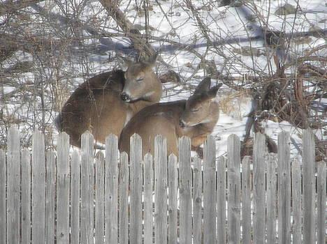 Sleeping Deer by Melissa Mendelson