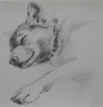 Sleeping Dog I by Jackie Hoats Shields