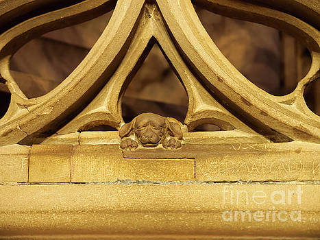 Sleeping dog in Strasbourg Cathedral by Louise Heusinkveld