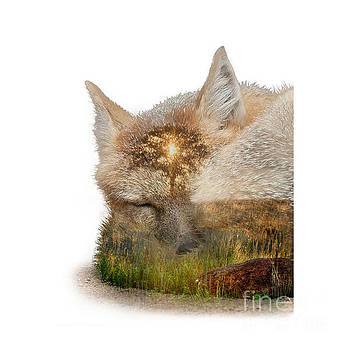 Sleeping Fox and Prairie Sunrise Double Exposure by DS Dodd