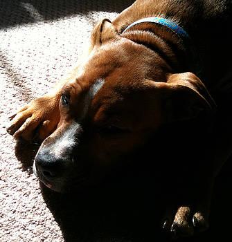 Sleeping In The Sun by Debbie Finley