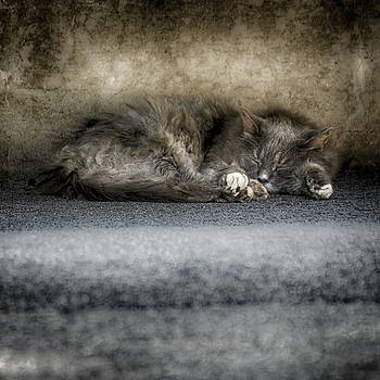 Sleeping Kitty by Scott Wyatt