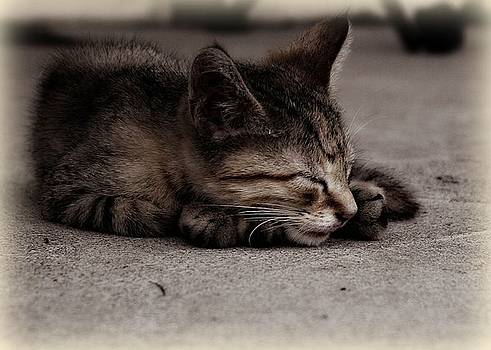 Sleeping kitty by Trisha Scrivner