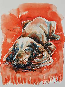 Zaira Dzhaubaeva - Sleeping Spaniel on the Red Carpet