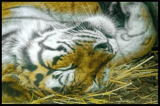 LeeAnn McLaneGoetz McLaneGoetzStudioLLCcom - Sleeping Tiger