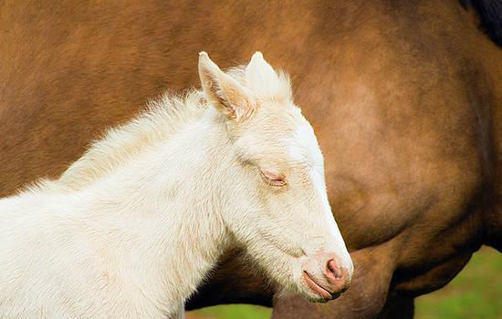 Sleepy Baby Horse by Tyra OBryant