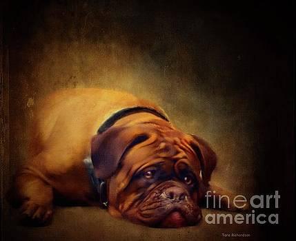 Sleepy Dog by Tara Richardson