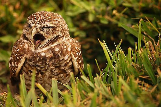 Sleepy Owl by Mandy Wiltse