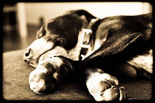 Sleepy Puppy by Magdalena Green