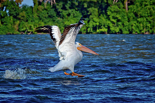 Sliding in For a Landing by Linda Unger