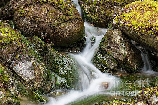 Slimy Mossy Falls by Rod Wiens