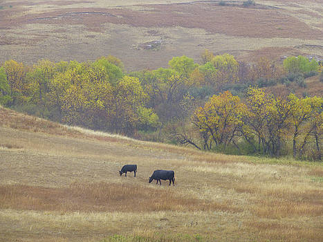 Slope County Pastorale by Cris Fulton