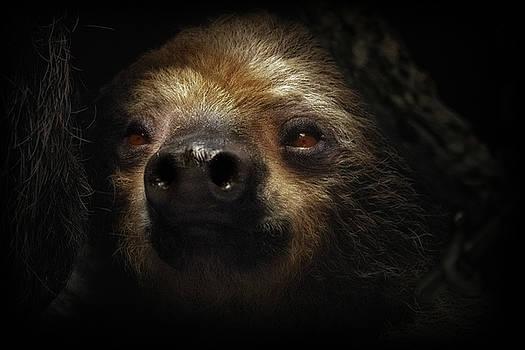 Sylvia J Zarco - Sloth Slow And Sweet