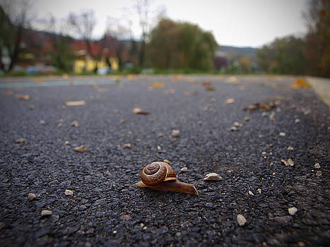 Slow Life by Tomas Trojcak