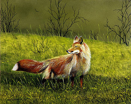 Sly Fox by Don Griffiths