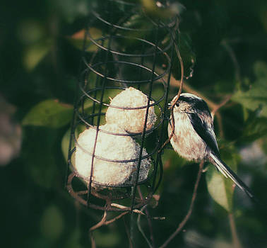 Small Bird by Frances Lewis