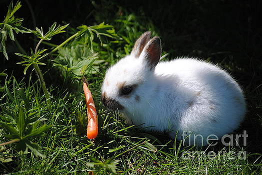 TChamberlin Photography - Small Bunny