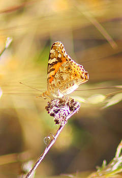 Small Butterfly  by Alexis F