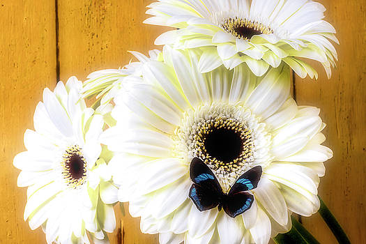 Small Butterfly On White Daisies by Garry Gay