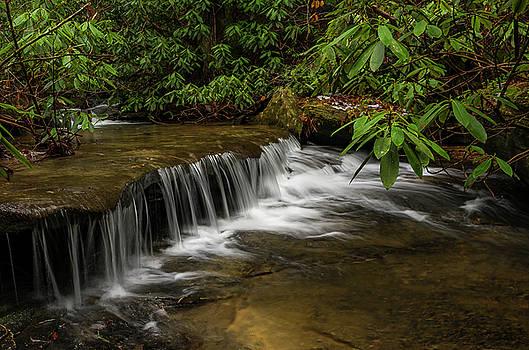 Small cascade on Pounder Branch. by Ulrich Burkhalter