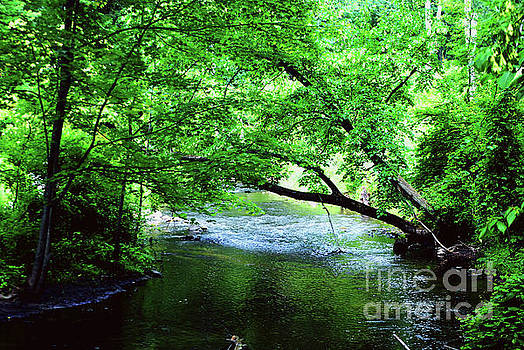 Gary Wonning - Small Creek