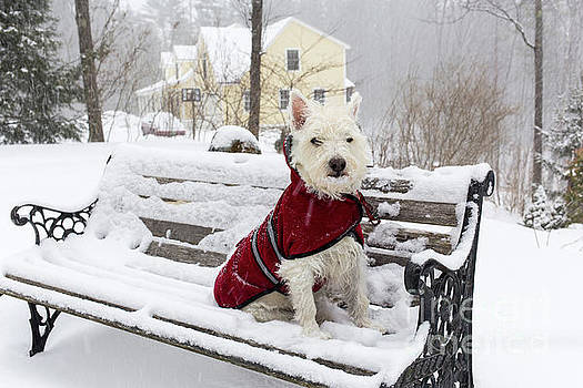 Edward Fielding - Small Dog Park Bench Snow Storm
