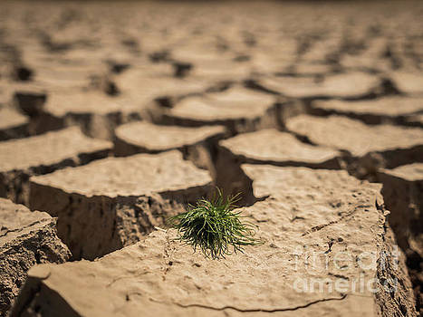 Small grass growth on dried and cracked soil in arid season. by Tosporn Preede