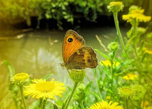 Valerie Anne Kelly - Small Heath Butterfly