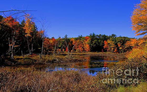 Small Maine Pond by Lennie Malvone
