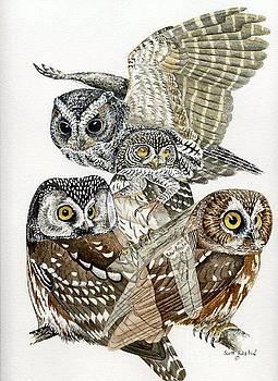 Small Mountain Owls by Scott Rashid