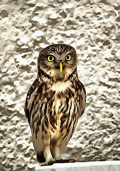 Tracey Harrington-Simpson - Small Owl In Camouflage