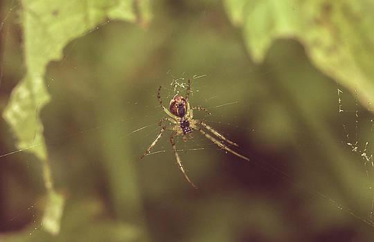 Jacek Wojnarowski - Small Spider in Forest