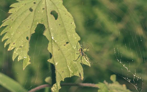 Jacek Wojnarowski - Small Spider in Forest with Leaf in Background