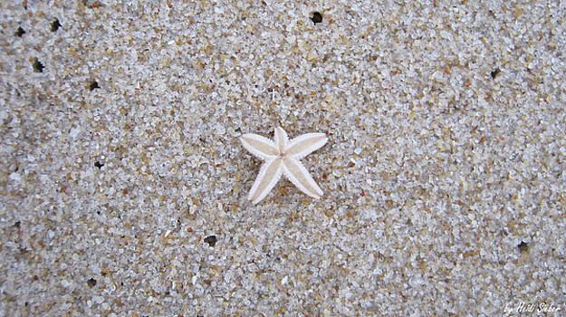 Heidi Sieber - Small star fish
