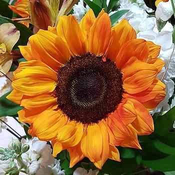 Small Sunflower  by Tammy Finnegan
