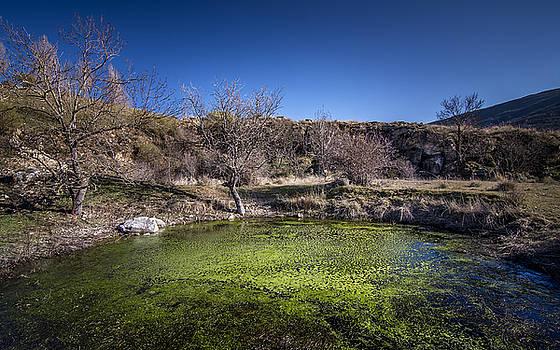 Hernan Bua - Small swamp