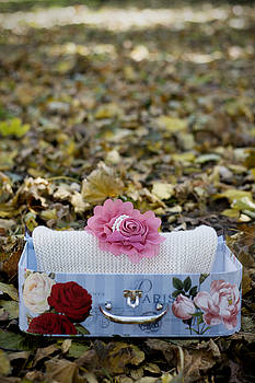 Small vintage suitcase in colorful autumn leaves by Newnow Photography By Vera Cepic