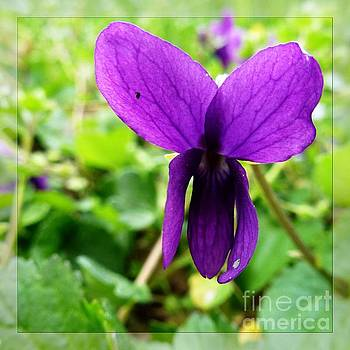 Small Violet Flower by Jean Bernard Roussilhe