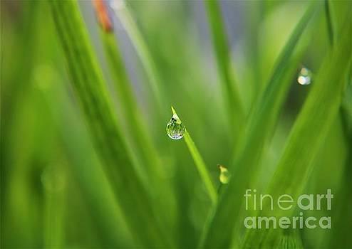 Smallest of Wonders by Dee Winslow