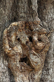 Smiley of Tree trunk by Kiran Joshi