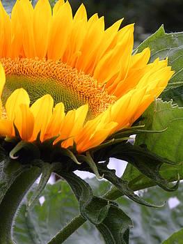 Peggy McDonald - Smiling Flower