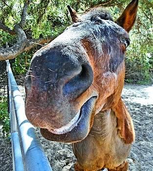 Tommi Trudeau - Smiling Horse