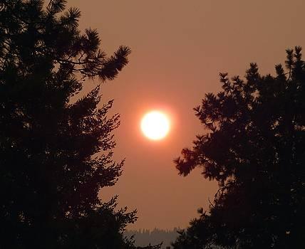 Smoke Shrouded Sun   by Will Borden