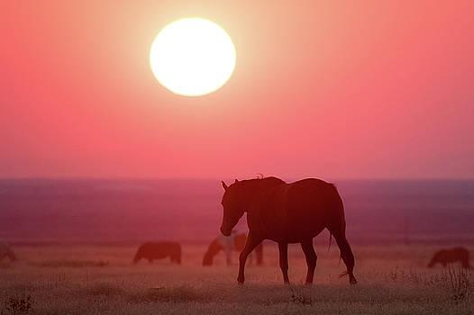 Smokey Horse Landscape by Wesley Aston
