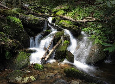 Great Smoky Mountains National Park Stream by Jerry Fornarotto