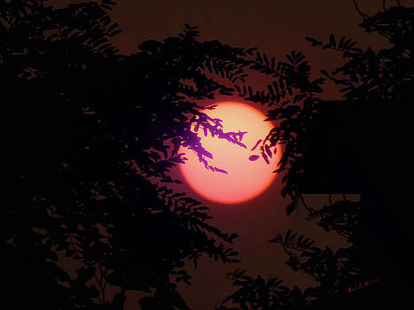Smokey Oregon Sun by Wendy McKennon